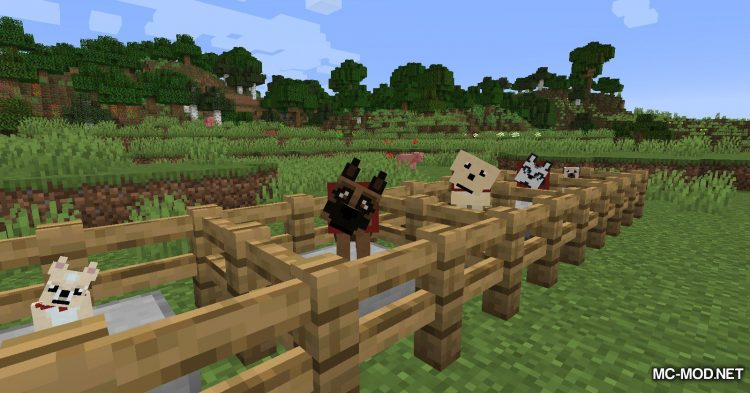 More Dogs mod for Minecraft (11)